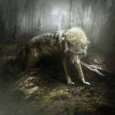 Wolves Fantasy Art