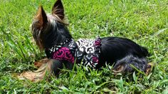Dog Cat Harness Vera Bradley Canterberry. Ordered for my baby.
