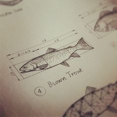 brown trout from The Power of Limits: Proportional Harmonies in Nature, Art, & Architecture