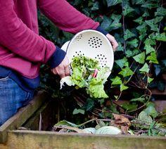 Was Darf Auf Den Kompost? | Gemüse / Hochbeet / Kompost | Pinterest Kompost Anlegen Richtige Pflege Garten