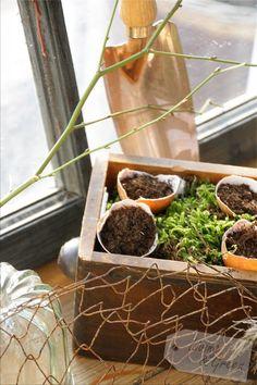 Pflanzenanzucht in Eierschalen sind auch eine hübsche Dekoration für die Fensterbank