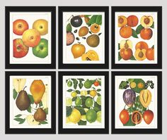 Fruit Print Set of 6 Antique Beautiful Botanical Apple Persimmon Peach Fig Pear Lemon Lime Citrus Colorful Plants Garden Nature Home Room Decor Wall Art Unframed NT. Beautiful set of 6 prints based on antique botanical illustrations from 1800. Wonderful details, colors and natural history feel. • The prints measure 4x6, 5x7, 8x10, or 11x14 inch. based on your selection and come with a white border for easy framing. • Printed on professional artist archival matte paper. • The prints are…