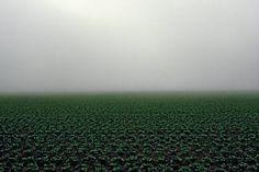 """Saatchi Art Artist James Cooper; Photography, """"Lettuce Field"""" #art"""
