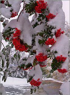 КРАСОТА КАКАЯ... Уютное Рождество, Святки, Рождественские Венки, Зимние Картинки, Рождественские Картинки, Зимние Развлечения, Рождество В Старые Времена, Рождество В Стиле Ретро, Снег