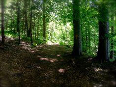 Waldweg Trunks, Plants, Hiking, Woodland Forest, Drift Wood, Tree Trunks, Plant, Planets