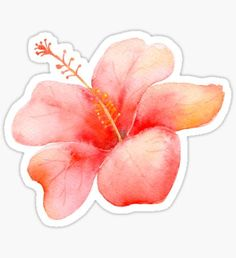 """""""Peach Pink Hibiscus Tropical Flowers"""" Sticker by pencreations Tumblr Stickers, Cool Stickers, Printable Stickers, Planner Stickers, Watercolor Stickers, Aesthetic Stickers, Tropical Flowers, Illustrations, Hibiscus"""