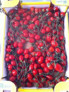 Pomodorini datterini, eccellenza alimentare italiana