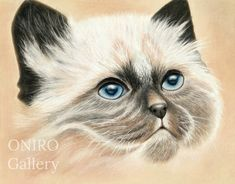 Siamese cat pastel pencils painting - based on a tutorial of C. Bradley.