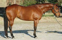 QH Geldings For Sale - Sliding On Top Performance Horses