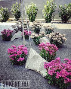 #varjúháj #előkert #kerttervezés #kerttervező #kerttervezes #kertész #gardener #designgarden #kertépítés #topgarden ▪️▪️▪️ Gardening, Plants, Lawn And Garden, Plant, Planets, Horticulture