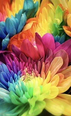 Rainbow flowers.....❤