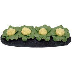 Miniature Cauliflower Garden Bed