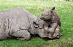 Rhino <3 How all moms feel...