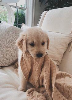 puppies cutest so cute \ puppies cutest so cute . puppies cutest so cute fluffy . puppies cutest so cute wallpaper . puppies cutest so cute videos . puppies cutest so cute corgi . puppies cutest so cute funny Super Cute Puppies, Cute Little Puppies, Cute Dogs And Puppies, Doggies, Cute Puppy Pics, Cute Pups, Cute Puppy Names, Cutest Puppy, Puppies Puppies