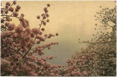 "Albarrán Cabrera""The mouth of Krishna"" #131. Japan, 2013."