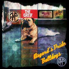 AP Greif. one of our Grandmasters.    Continental Bulldog Male  www.asgards-pride.com