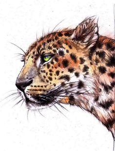 Cat Panther Drawing colour pencils