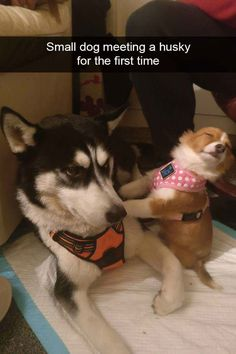 Animal Pictures That Make You Laugh Uncontrollably - 2