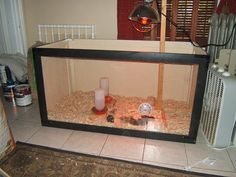 My view of the Incredible Chick-quarium from my desk.  Plexiglass front with plywood back & sides.  Footed lamp holder.
