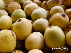 Marula Oil - rich history, background and sustainable harvesting   #Marula #MarulaOil #greenbeauty #beauty #skincare #raw #ingredients #marulafruit