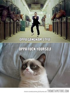 Omg I love this cat lmao it cracks me up!