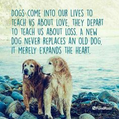 Truth. I miss my dogs... M ❤️ - 1996 S ❤️ - 2002 O ❤️ - 2017 S ❤️- 2018  Faithful & Loyal fur babies. Y'all were so loved beyond words!
