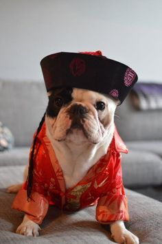 "Confucius says ""FRENCHIES ROCK""!!!"