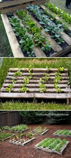 pallet garden Staple garden cloth on the backside of the pallet fill with dirt and start growing: Easy Garden, Diy Garden Decor, Diy Garden Ideas On A Budget, Patio Ideas, Garden Ideas With Pallets, Creative Garden Ideas, Cheap Garden Ideas, Diy Patio, Diy Ideas
