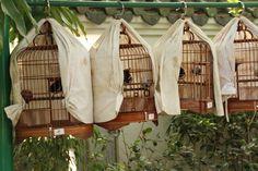 Bird Garden, Kowloon