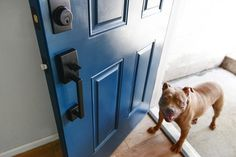 This post is in partnership with Schlage.As the dust has been settling around the garden apartment (like, the literal drywall dust - we're stillfar from the finish line!), I've been obsessing over the cleanliness of our freshly painted doors and new interior hardware. Every time we pop down to…