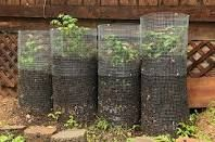 potato towers - I used to do this with a barrel.  when you see the tops pop through you just add more soil...produces a huge amount of potatoes