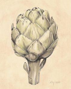 French Artichoke I Botanical Print - Vintage Look 8x10 - Inspired by Country Living in France