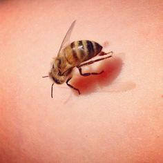 Beautiful honey bee