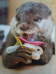 Nemo the Otter <3