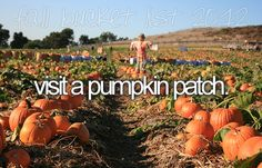 Visit a pumpkin patch.