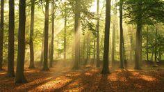 Beautiful Sapele forest - Sapele hardwood floors from Mirage hardwood floors