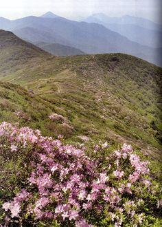 #Deogyusan National Park, Korea   For more info: http://english.visitkorea.or.kr/enu/SI/SI_EN_3_1_1_1.jsp?cid=264292