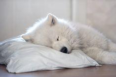 Sweet dreams - null