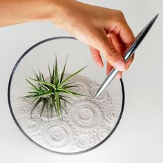 Air Plant Zen Garden White Discounted by wendiland on Etsy                                                                                                                                                      More
