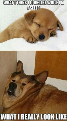 What I think I look like when I'm sleeping and what I actually look like when I'm sleeping