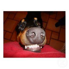 Smiling Doberman....cute!