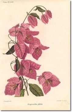 Мобильный LiveInternet Illustrated Book Plate Illustration from Revue Horticole 1800s | Вельветуча - Дневник Смородиновое_настроение |
