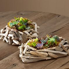 Driftwood Succulent Garden - Rectangle We've paired two rugged natural survivors of wind and storm-succulents and driftwood-and given them safe harbor in a compact indoor garden that is easy to grow and even easier to enjoy. Driftwood Planters, Driftwood Projects, Driftwood Table, How To Water Succulents, Succulents Garden, Flowers Garden, Diy Jardin, Succulent Landscaping, Basket Planters