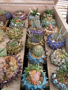 Succulents look great in Mike Cone's pottery