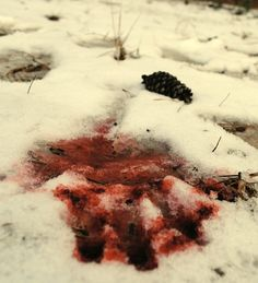 bloodstain in the snow