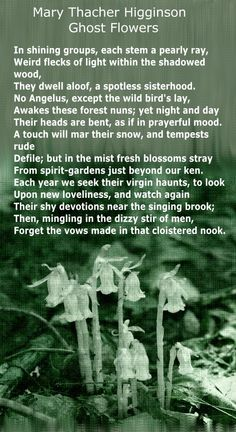 """Ghost Flowers"" by Mary Thatcher Higginson..."