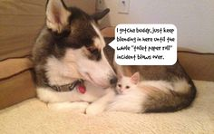 """Dogs and Cats Living Together = Mass Hysteria! Take a Look at These Unlikely Companions.I gotcha buddy, just keep blending in here until the whole """"toilet paper roll"""" incident blows over"""
