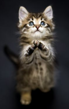 "#CATS ✮✮Feel free to share on Pinterest"" ♥ღ www.FASHIONUPDATES.NET ."