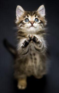 So precious! <3