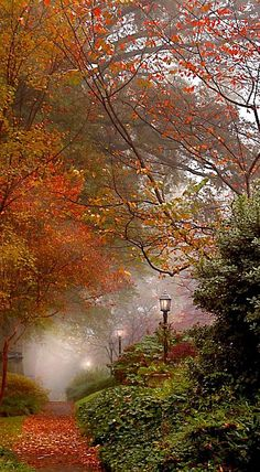 Autumn Mist - I love the lamps in the mist with the beautiful fall foliage. Fall Pictures, Pretty Pictures, Beautiful World, Beautiful Places, Simply Beautiful, Autumn Scenes, Seasons Of The Year, All Nature, Belle Photo